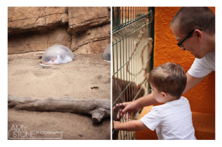 LA Zoo - Amy Stone Photography